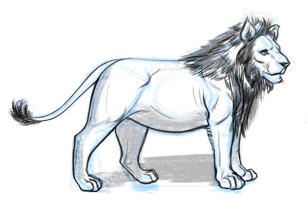 Lion Sketch by KingJackalope