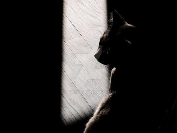 Light by KtSeery