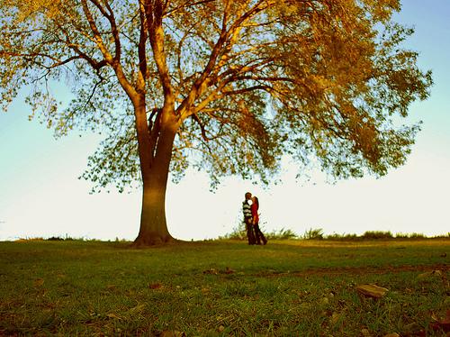 Under the giving tree  by BunnyKim - Ar�iviм*  S�rekli G�ncel ..