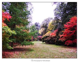 Autumn Colours by JRose-Photography