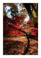 Autumns Sun