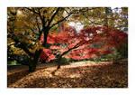Autumns Delight II