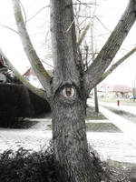 monocular tree by krumplicsengo
