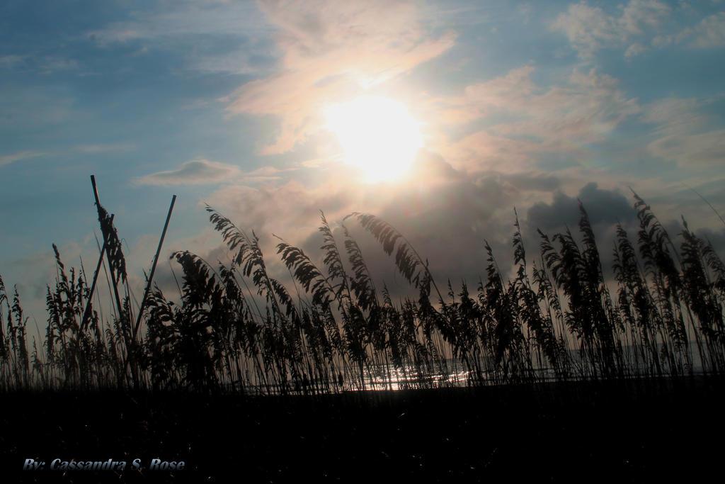 Sun Shine Shore Line by myeyesinthemirror