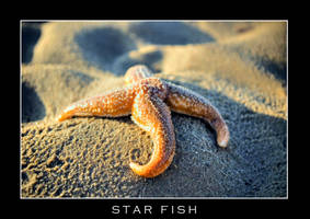 starfish ver1 by FinalTouch