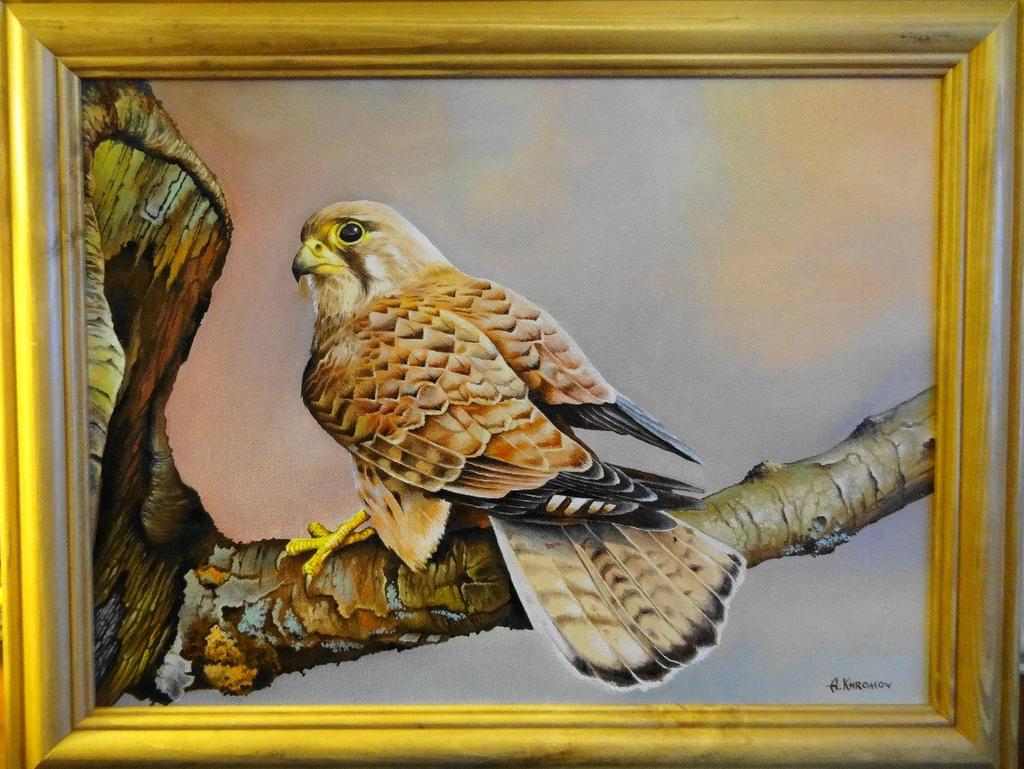 hawk by Anubiscomics