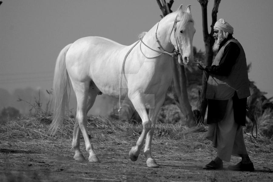 Marwari Horse By Manusharma On Deviantart