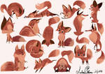 Lots of Foxes