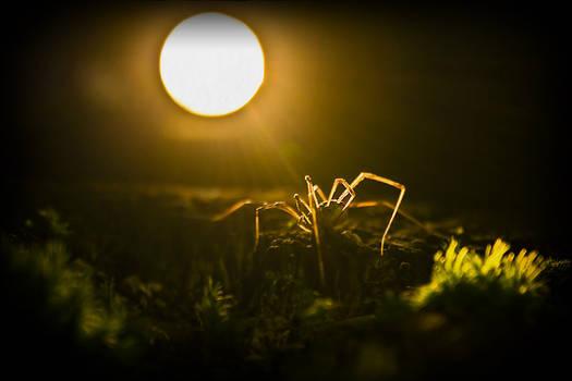Sun of the Underworld