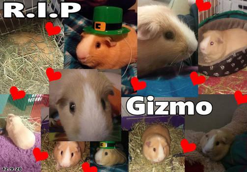 R.I.P Gizmo