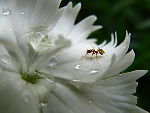 tiny organisms by spoukideria