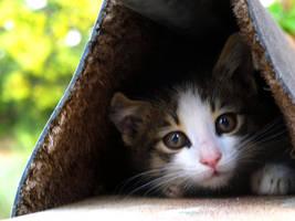 Hiding by spoukideria