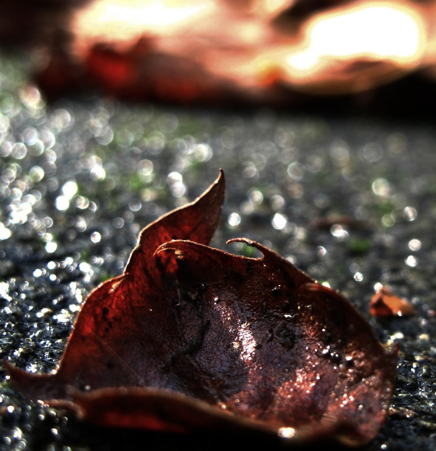 Flamy Leaf by spoukideria