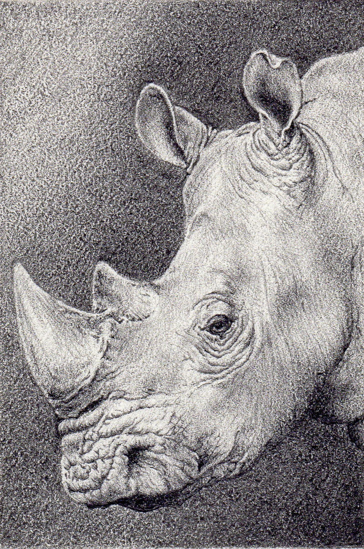 Rhino Mini Drawing by DarrelMorris