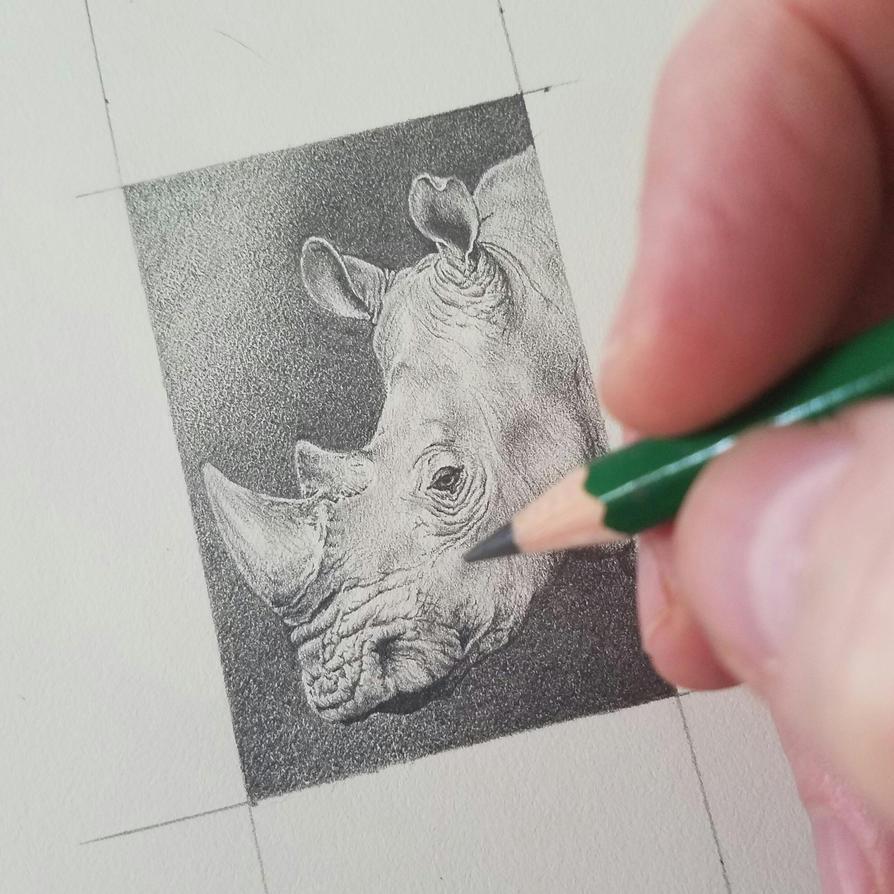 Rhino Mini Drawing Work in Progress by DarrelMorris