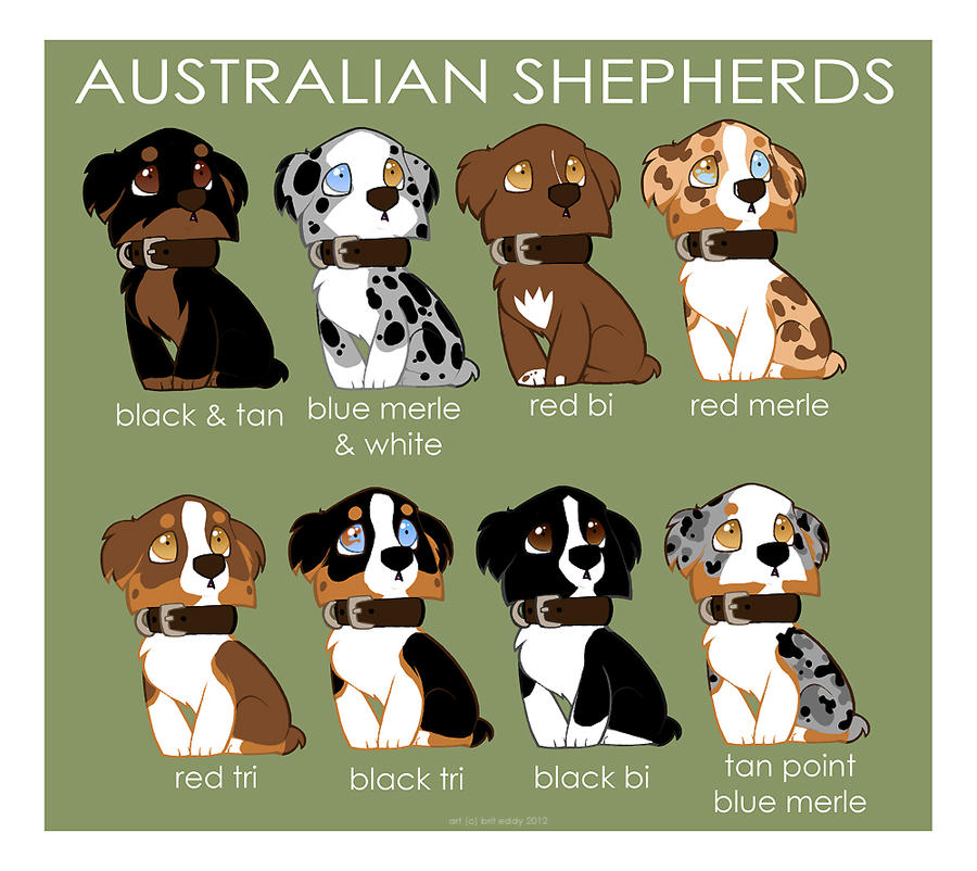 Australian Shepherd Color Patterns by `briteddy on deviantART