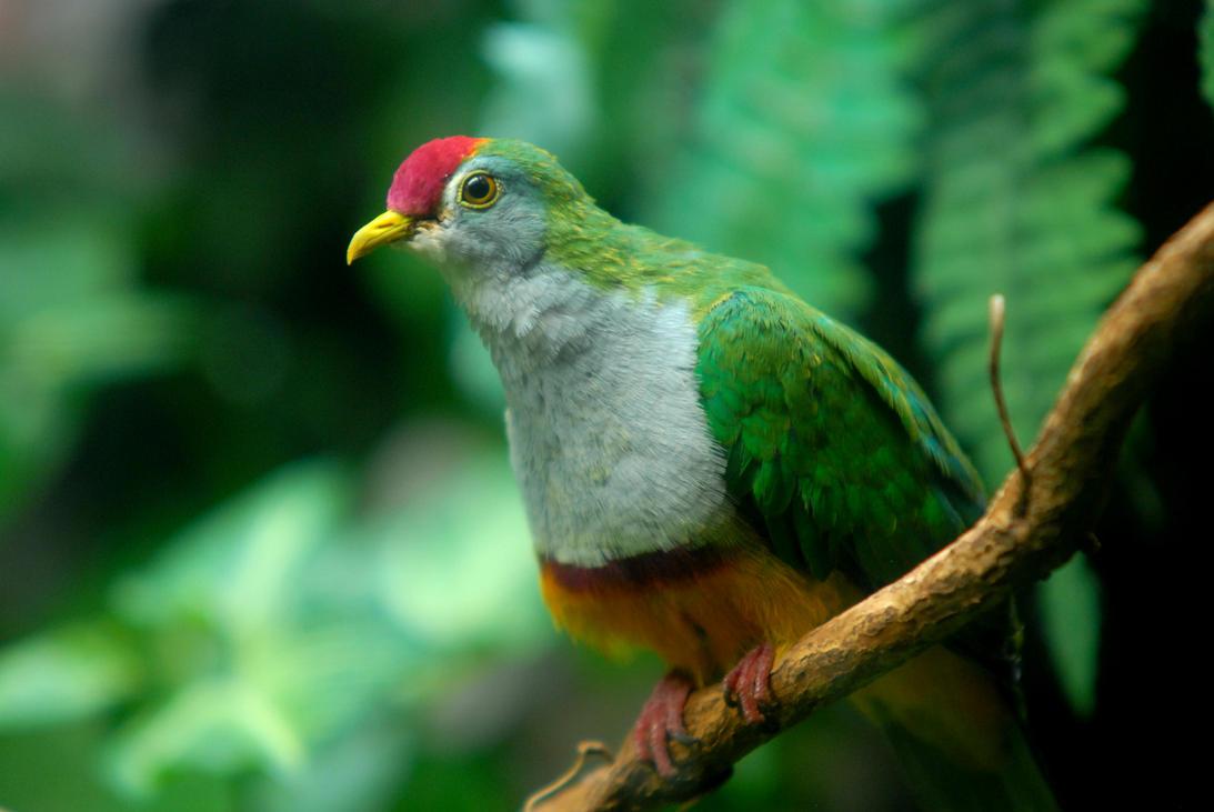 Bird of Green by DelitescentCalm