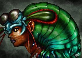 Lady Mantis Shrimp