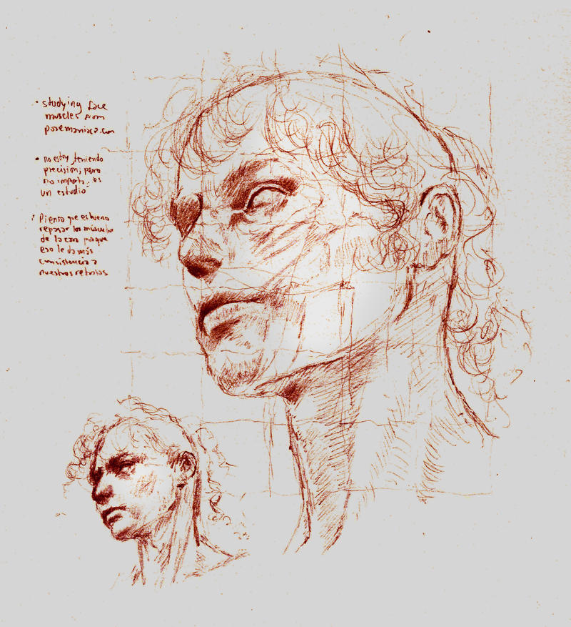 Anatomy Face Study by SILENTJUSTICE on DeviantArt