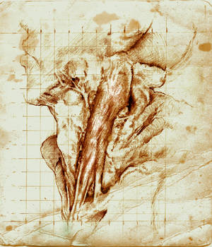 Sternocleidomastoid study by SILENTJUSTICE