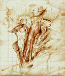 Sternocleidomastoid study