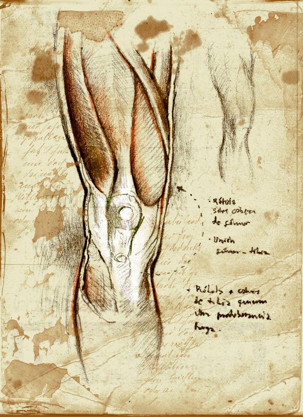 Anatomy practice thigh knee by SILENTJUSTICE on DeviantArt