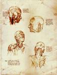 Anatomy Studies from Yokochi's