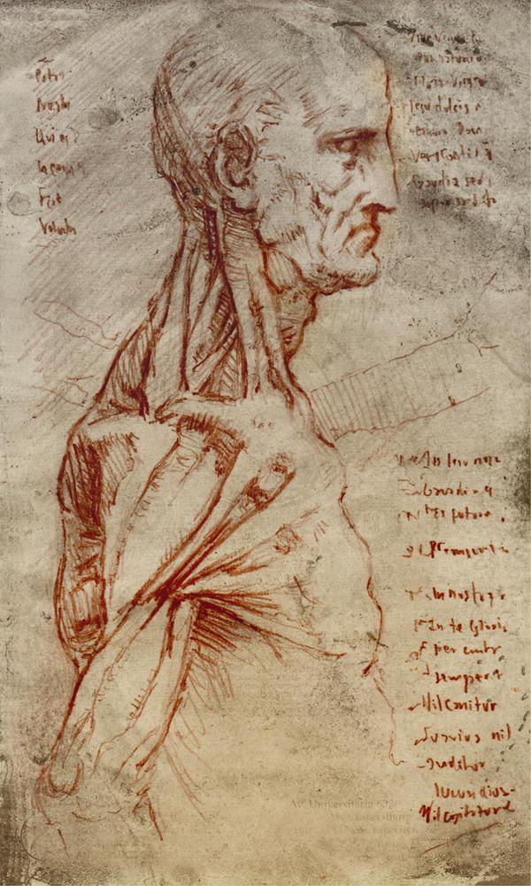 Study from Da Vinci anatomy sketch by SILENTJUSTICE on DeviantArt
