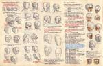 Anatomy notes 6