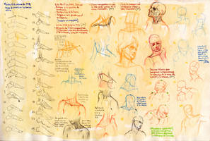 Anatomy notes 11