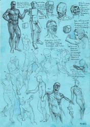 Anatomy sketch study 21019AS