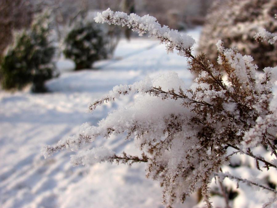 Winter wonderland by bialy-motyl