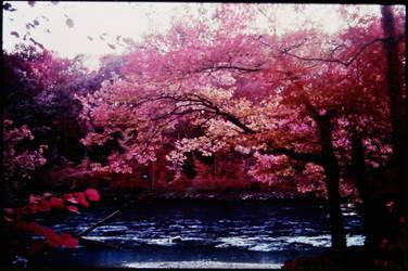 Colour Infrared 191007-6