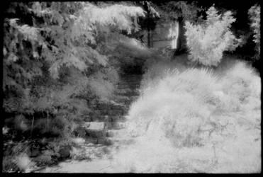 Infrared 190707-2