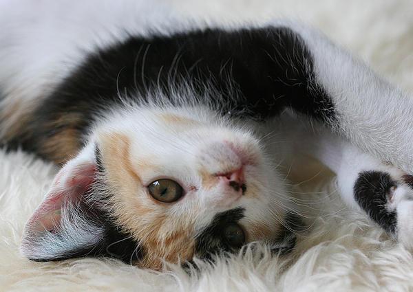 Cat Teaching Kitten To Hunt
