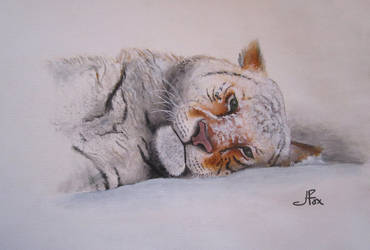 .:Bateman Snow Tiger:. by JessFox