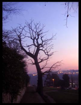 1. Dead Oak