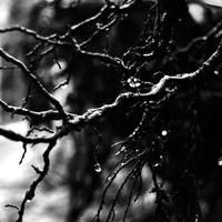 Pain by AlexCozaciuc
