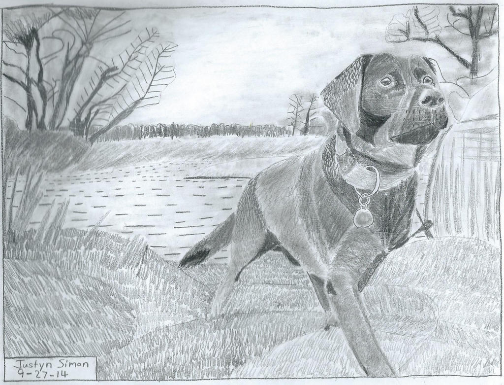 Lab next to water in Onyx pencil by Justyn16