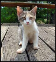 Kitty by Alabamaphoto