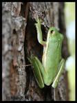 Flipping frog