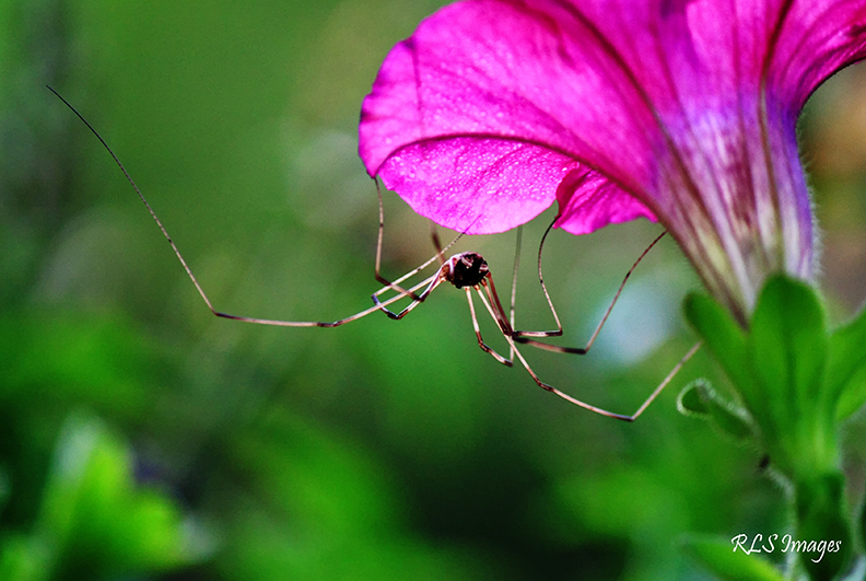 Spider by Alabamaphoto