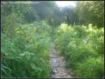 Landscapes - Woodland Trail 1