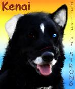 Kenai's Avatar by Str0ngwolf