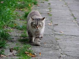 street cat A by Bambaryllo