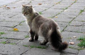 street cat B by Bambaryllo