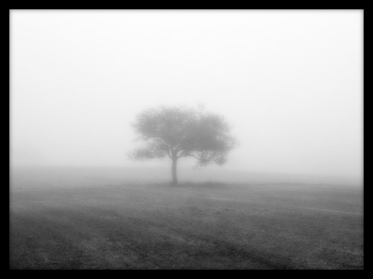 The Silence of Loneliness by Winterregen