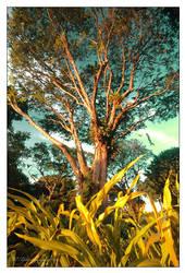 Hometree... by CommanderDex