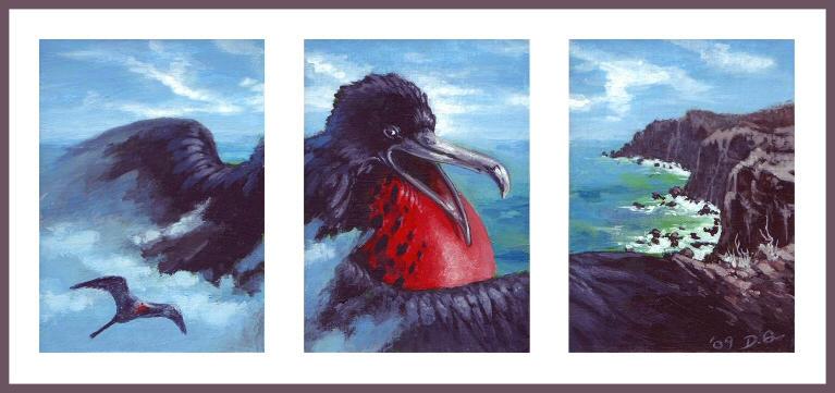 ACEO: Magnificent Frigatebird by donnaquinn