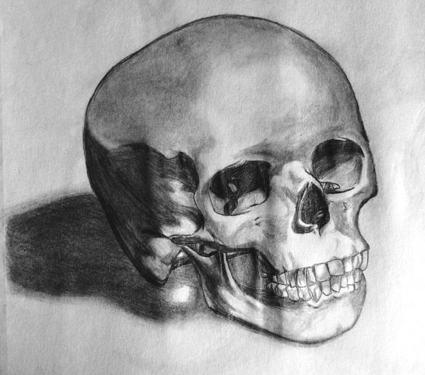 source fc00deviantartnet report human skull drawing